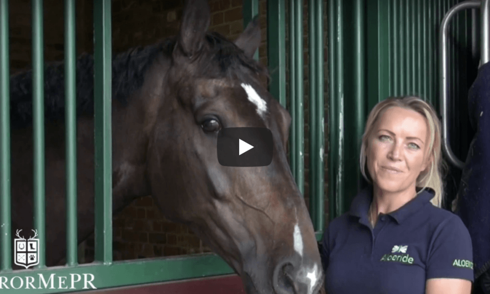 Getting To Know A New Horse – Leah Beckett