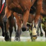 Galloping Horses At Cheltenham