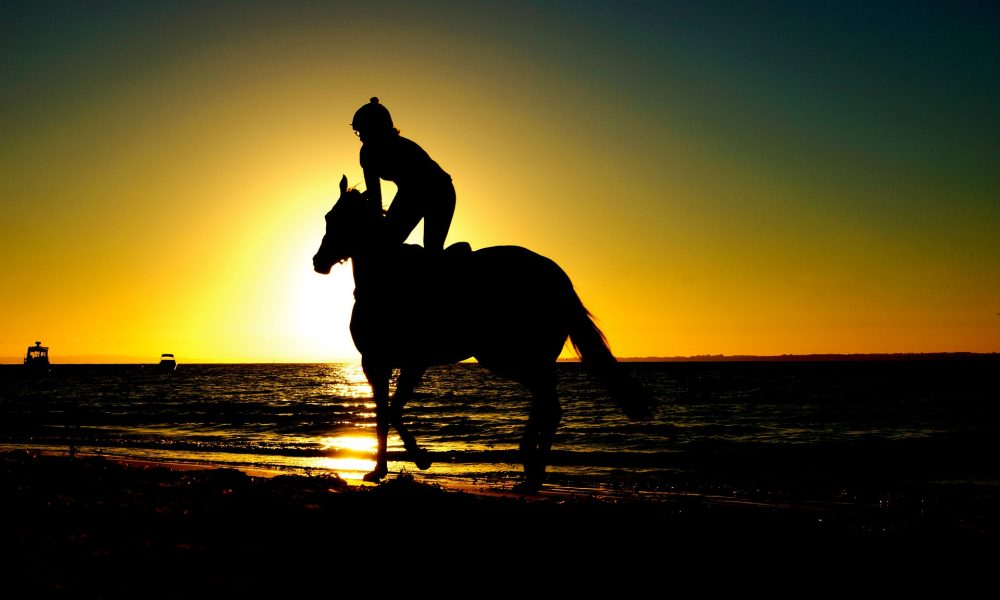 11 Horse Care Tips For Hot Weather