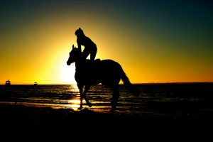 Riding your horse during a heatwave