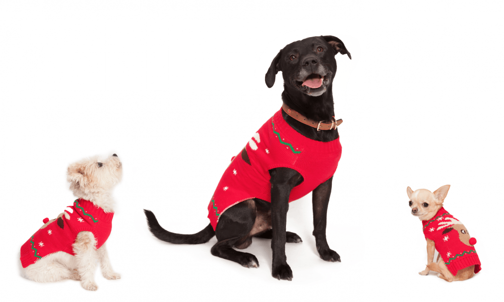 10 Tips For Keeping Your Dog Safe & Happy This Festive Season