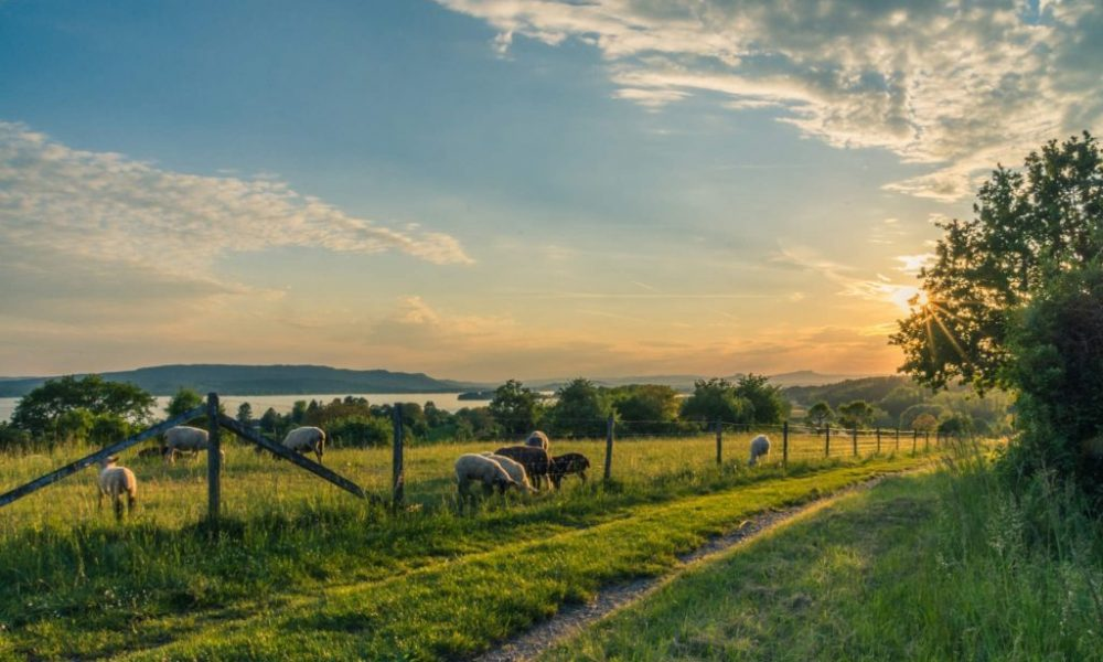 A Complete Guide To Enjoying The Countryside