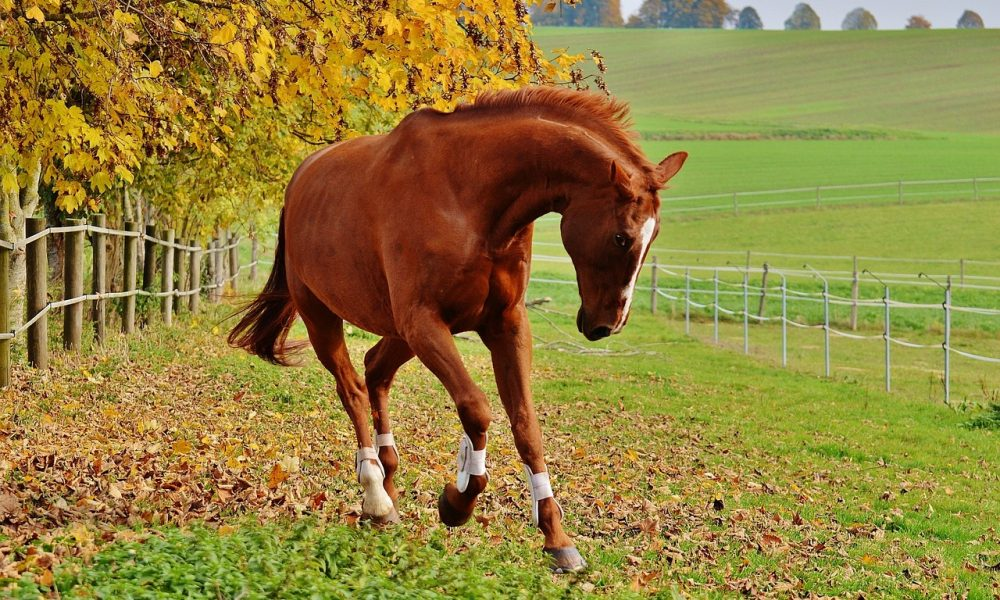 AN EQUESTRIAN'S TOP 5 REASONS TO LOVE (And Hate) AUTUMN