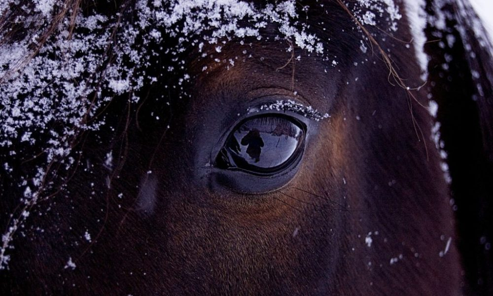 An Equestrian's Top 5 Reasons To Love AND Hate Winter