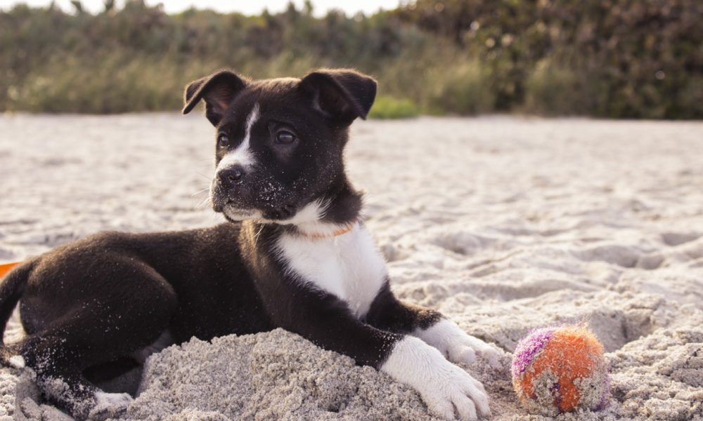 Five Idyllic Dog Friendly Beaches!
