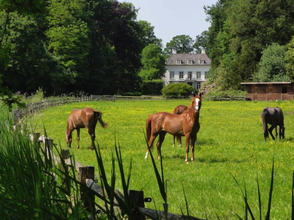 How To Buy Your Ultimate Equestrian Home (And Yes, You May Need to Win the Lottery)