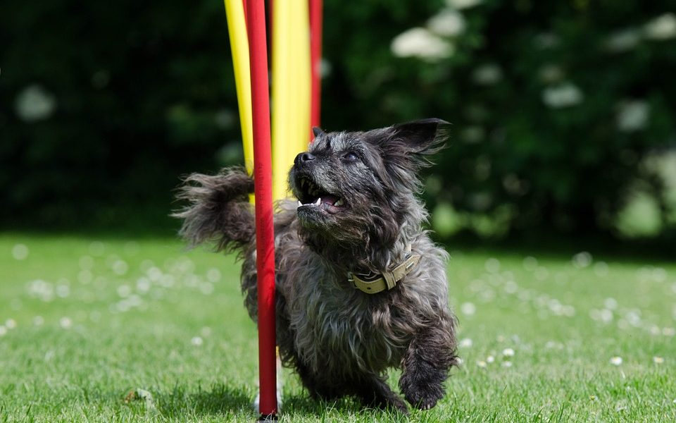 Keeping Your Dog Fit And Healthy While Having Fun | Canine PR