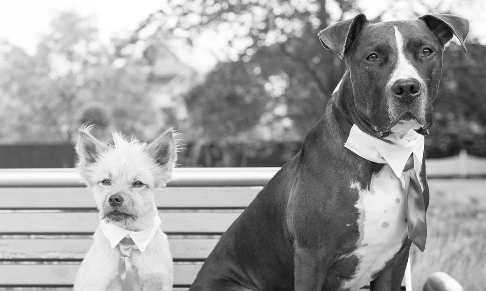 Our Step-By-Step Guide To Having Your Pet At Your Wedding