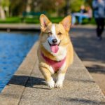 The-Best-Spots-To-Visit-With-Pets-In-London