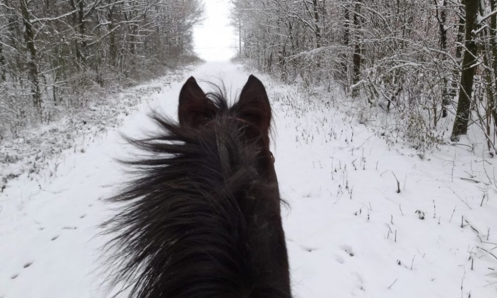 Top-Tips-For-Looking-After-Your-Horse-This-Winter