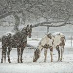 Winter-Warriors