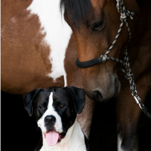 Horse & Dog Together