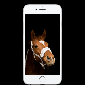 Horse on mobile phone