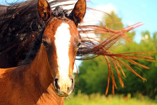 All In A Name – Horse Names We Love