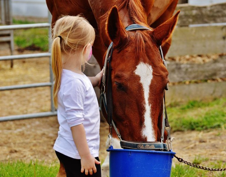 Back To School – How Horses Can Shape Your Childhood