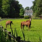Horses in field in front of mansion