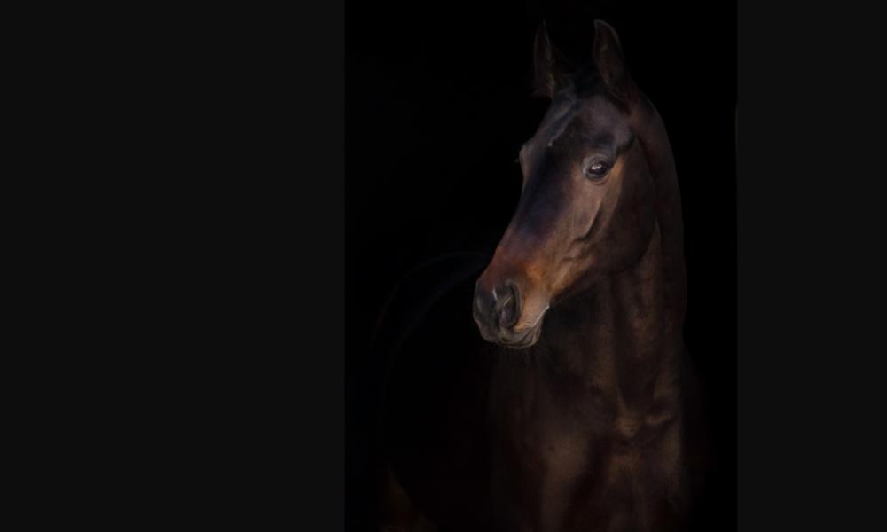 the dark horse in equestrian social media services