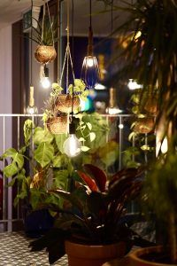 A selection of plants and lights inside a dimly lit room
