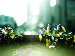 A selection of purple and yellow flowers overlooking a city skyline