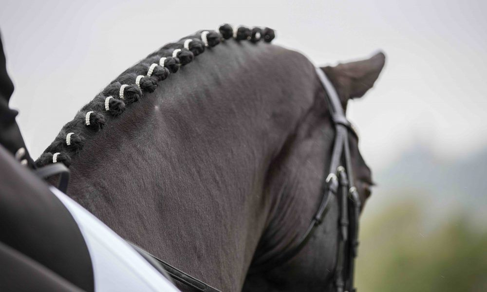 How To Improve Your Dressage Scores Like A Pro