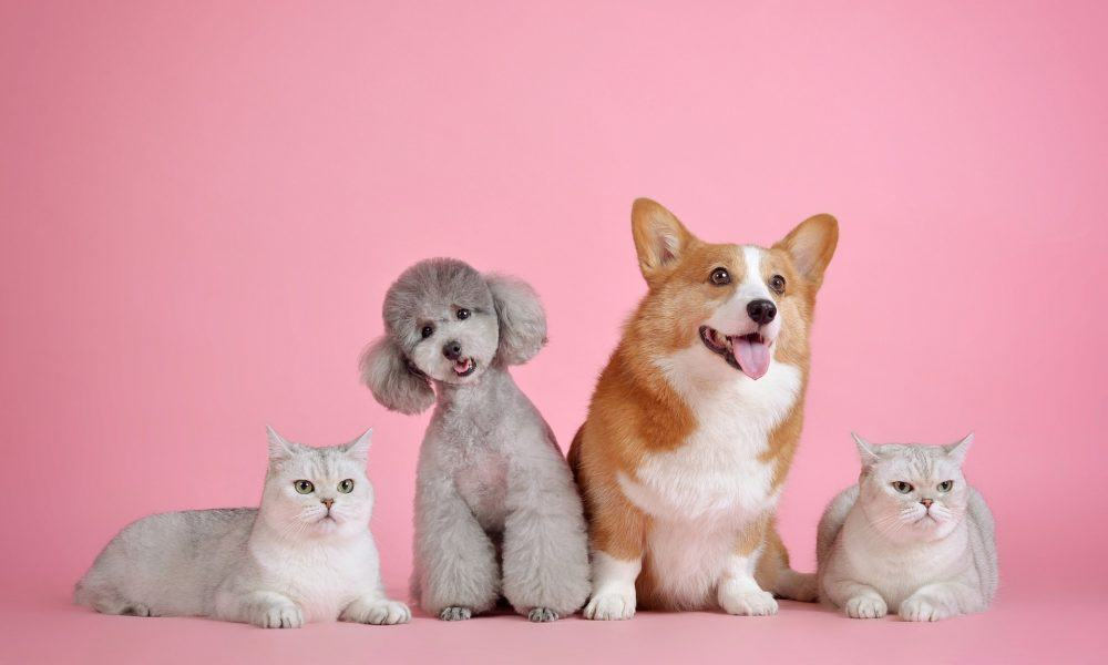 A group of puppies and kittens sat together against a pink backdrop.