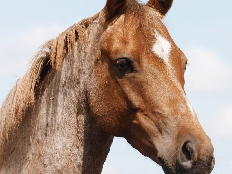 The 6 Realities Of Owning A Pony As An Adult