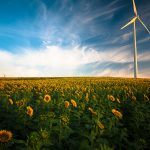 A wind turbine in a field of sunflowers.