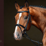 Equestrian Blogger/Vlogger Finalists 2019 Announced!