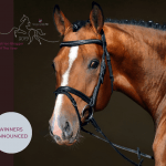 Beautiful bay dressage horse promoting the equestrian blogger/vlogger awards