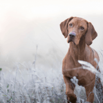 12 Tips For A Dog-Friendly Garden This Winter