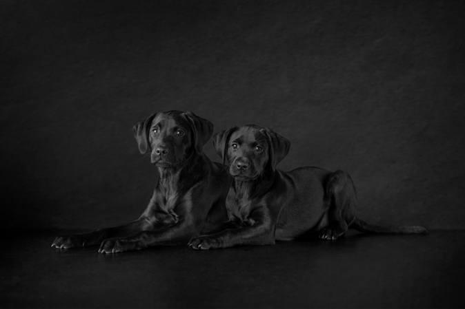 The Secret To Award-Winning Pet Photography