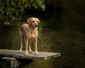 Beautiful Dog By Stream By Pet Portrait By Karen Bennett Photography