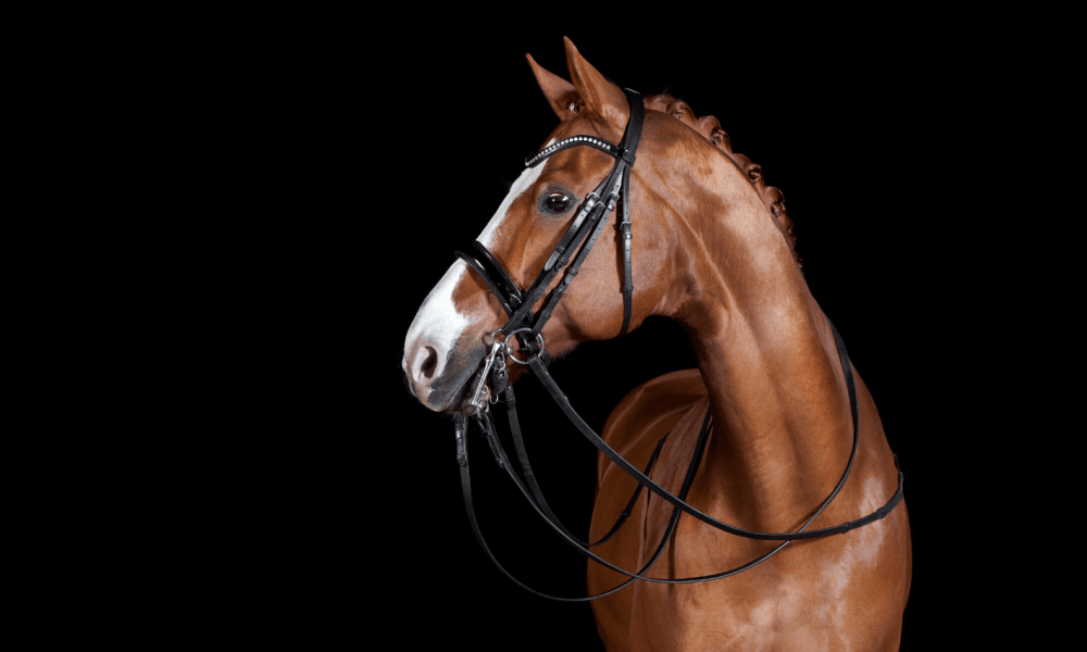 Beautiful Dressage Horse Promoting Equine Marketing