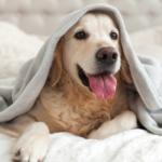 happy pooch at a dog-friendly luxury break