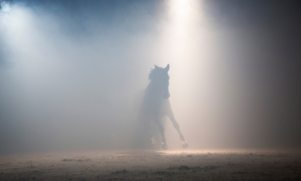 A horse gallops into the spotlight in the equestrian blogger awards 2020