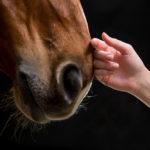 help a horse