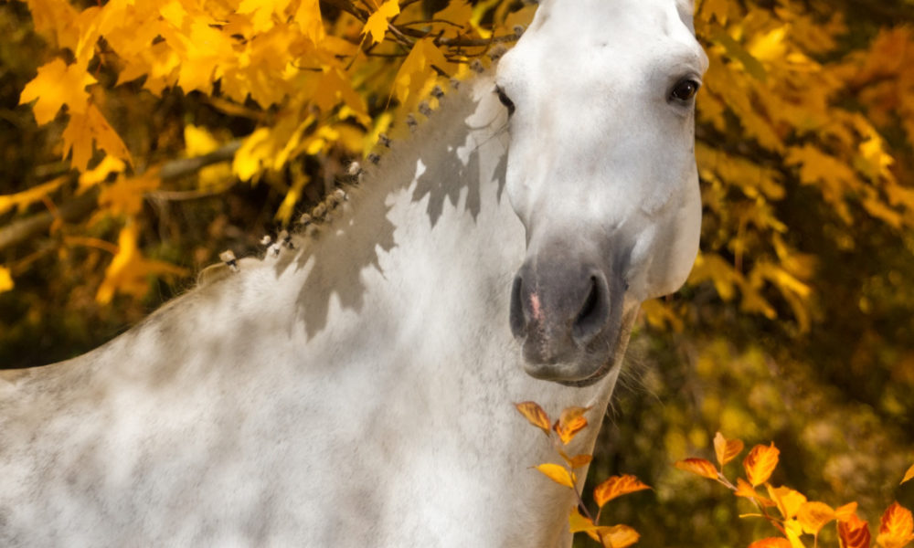 Beautiful horse in dappled light and autumn leaves
