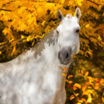10 Horse Autumn Pictures You'll Love
