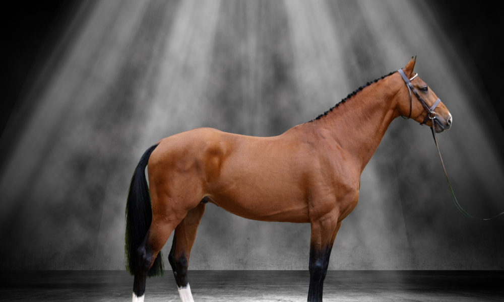 stunning horse at Horse Of The Year
